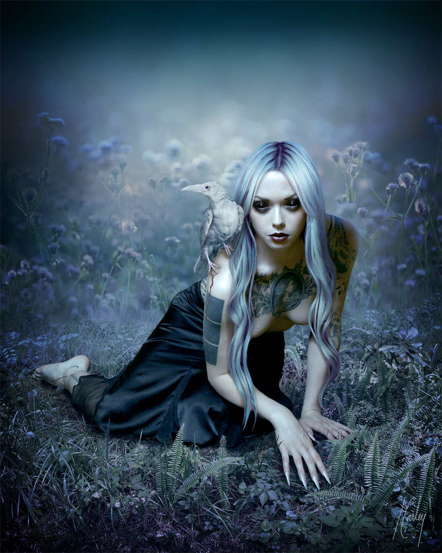 Lori-Earley-Plight-of-the-White-Raven